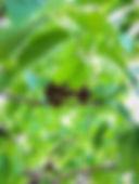 leaf problem 1.JPG