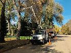 tree pruning work.jpg