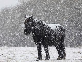 串田明緖写真展 / Akio Kushida Photo Exhibition『Talking with the Horses』