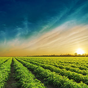 Farm-Field.jpg