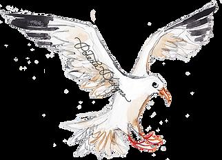 web_seagull copy(watermark).png