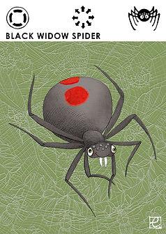black widow spider -front.jpg