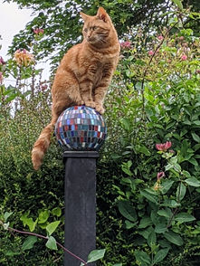 Frankie cat on post.jpg