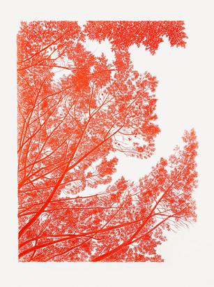 Umbracle vermell