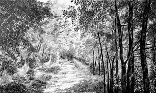 Trama per a un bosc