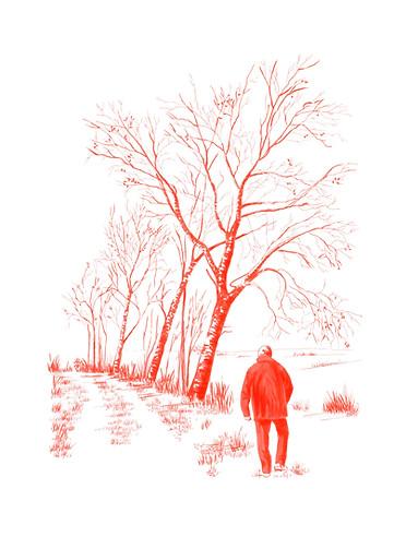 Pare i arbre vell