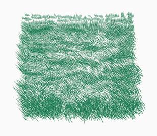 Herba pentinada 2