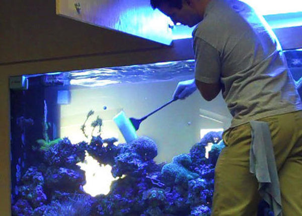 aquarium-maintenance-services-500x500.jp