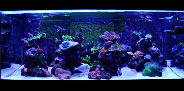 Reef Loja
