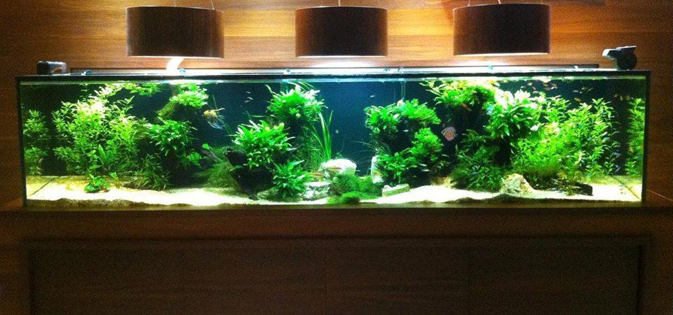 Discus Aquarium LG