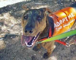 New Event--Trails for Tails Hike-a-thon!