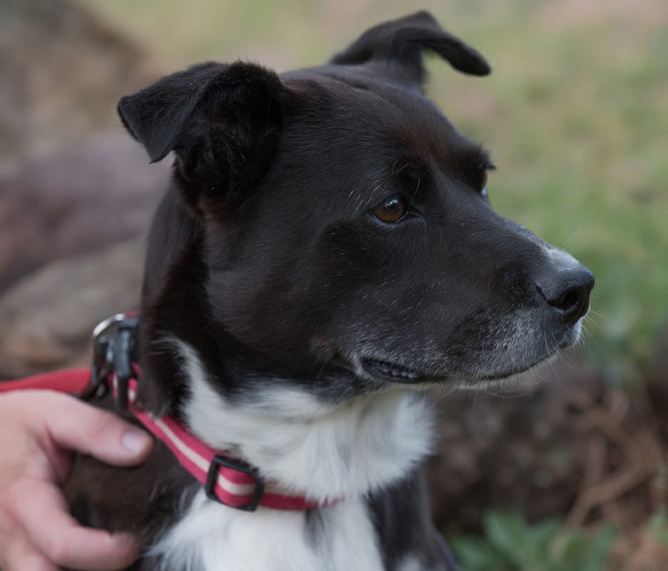 Magnolia - from Texas to Colorado to get cured from heartworm