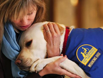 Don't Get Bitten by the Law: Requirements for Service & Assistance Animals