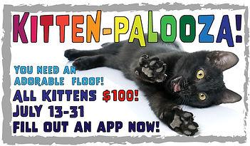 KittenPalooza-50.jpg