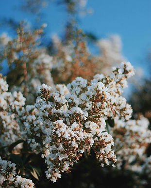 Flores floreciendo