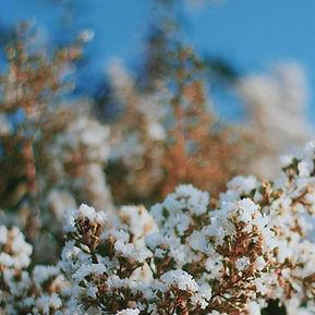 Blühende Blumen