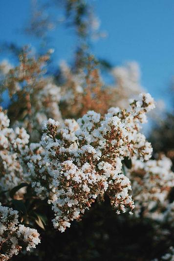 Fleurs en floraison