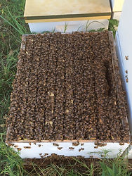 picture of a strong hive