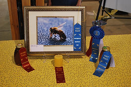 picture of all the awards from a local honey show