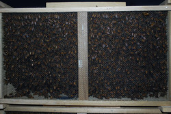 3lb pkg bees.jpg