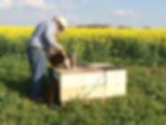 picture of all bee hives
