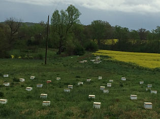 picture of honey bees on a new frame