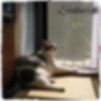 香川県坂出市のペットシッター・散歩代行・しつけ方教室
