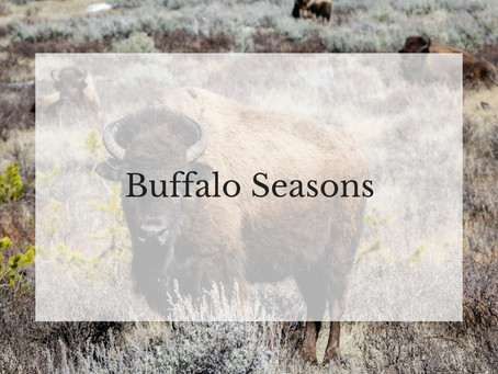 Buffalo Seasons