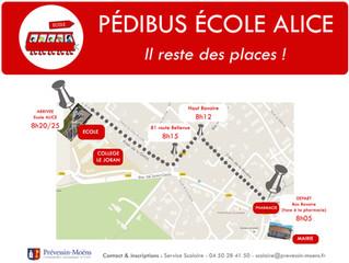 Le Pédibus, c'est quoi?
