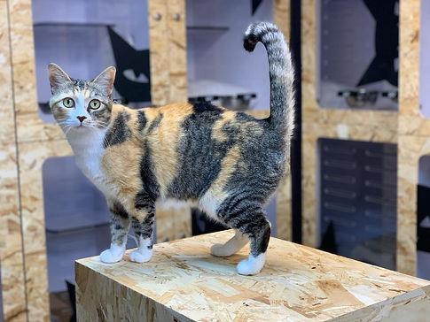 cat at pawtery.jpeg
