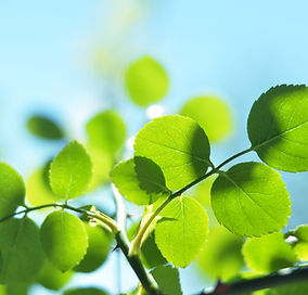 leaves-2469000.jpg