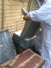 Extracting the honey from the hive