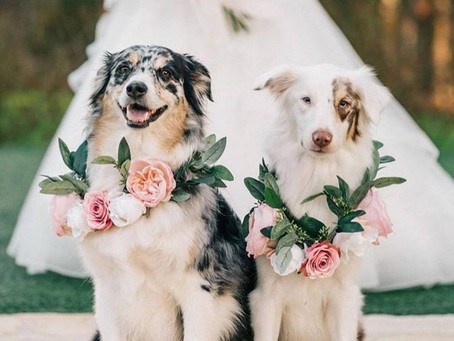 Including Your Pets in Your Big Day