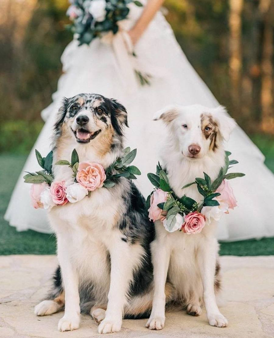 Including your pets in your wedding
