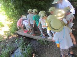 Forest Explores in Summer School