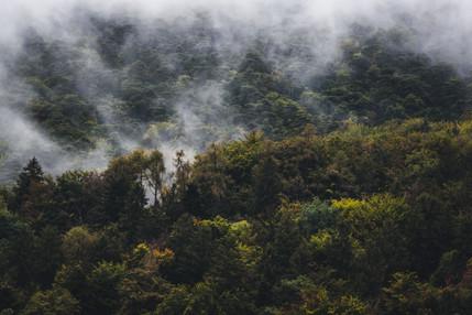 Misty Trees, Switzerland