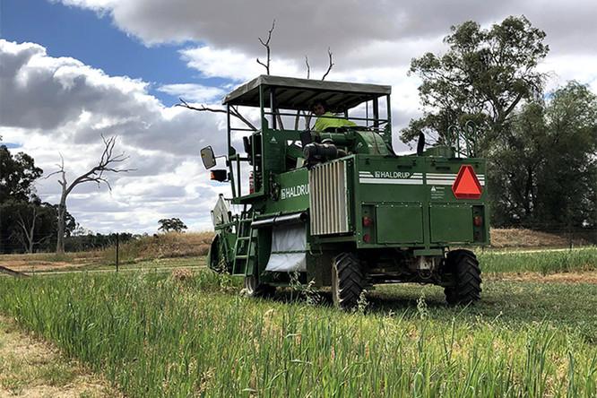 Haldrup-harvester-f55-perth-wa-CNE.jpg