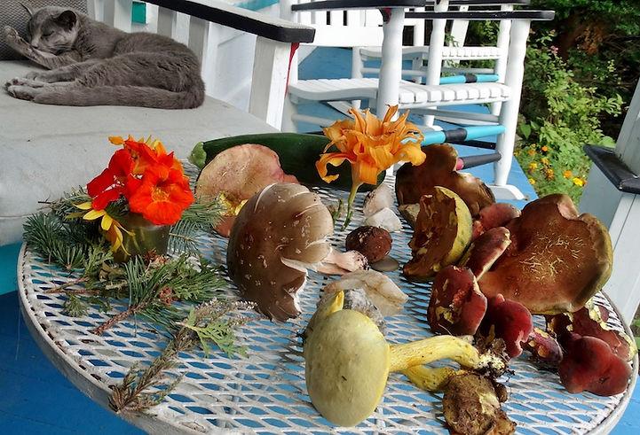 mushrooms etc front porch Aug, 2018.JPG
