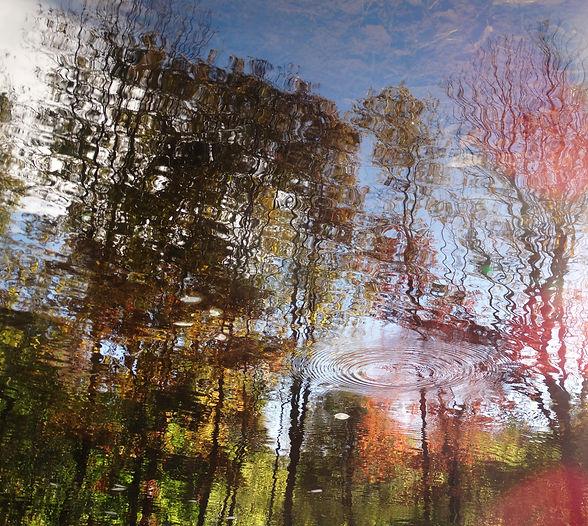 pond -- fall trees rippling Oct 2015.JPG