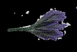lavender_edited.png