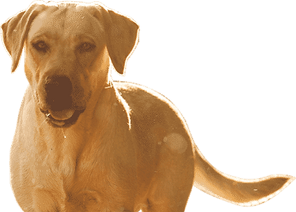 LFN_Section_4_dog.png