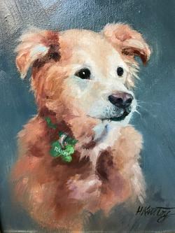 Herb Krutoy_4090 dog