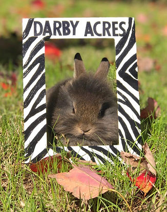 Birthday Gift - Hand painted sign (Bunny
