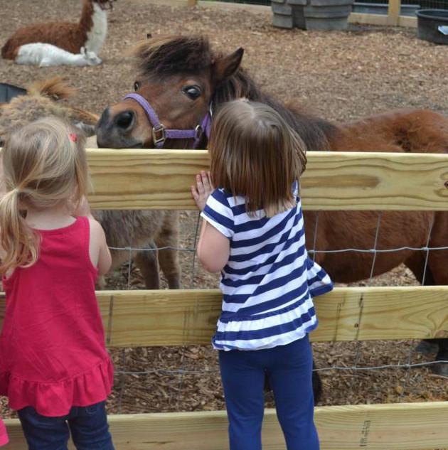 kids enjoying petting farm_edited.jpg