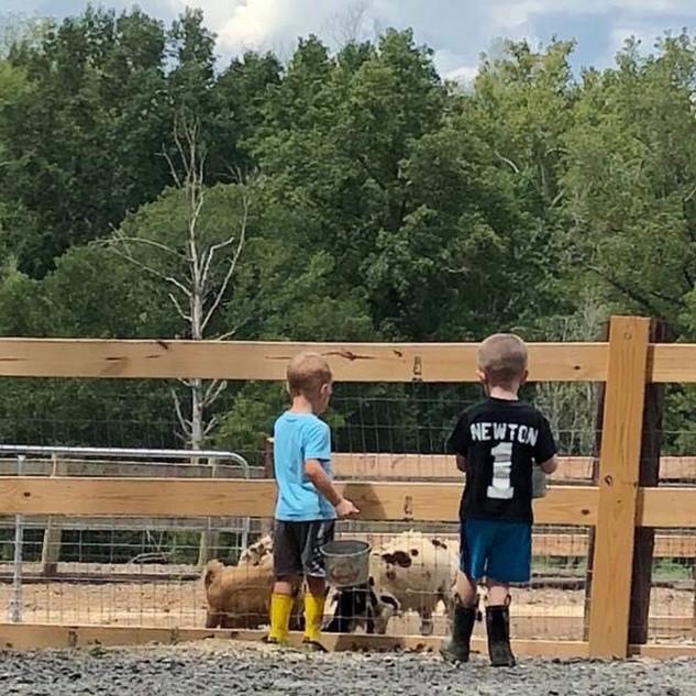 Boys feeding pigs 2.jpg