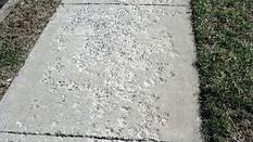 De-Icing Agents Can Destroy New Concrete
