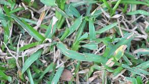 Address pest/disease problems in landscape