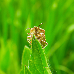 Garden pests causing problems