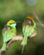 best nature photography_edited.jpg