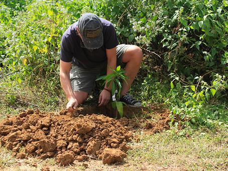 Tree Planting campaign